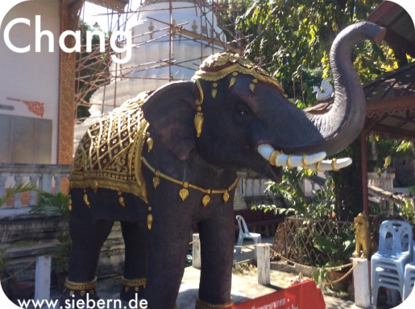Chang der Elefant